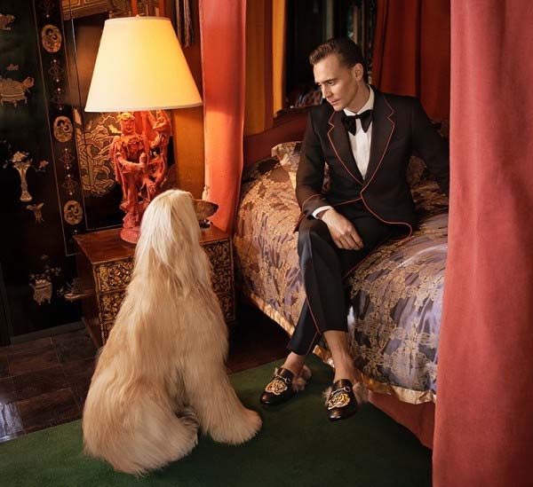 Tom Hiddlestone dla Gucci