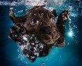 "Galeria ""Underwater Puppies"" od Seth'a Casteel'a"